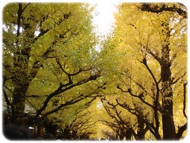 金色のトンネル