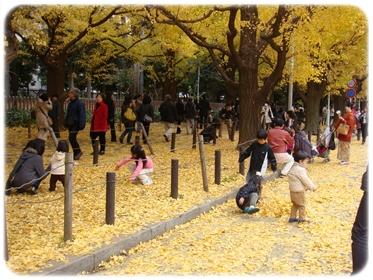 黄色い落ち葉で戯れる~