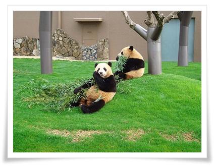 パンダの写真2-2.jpg